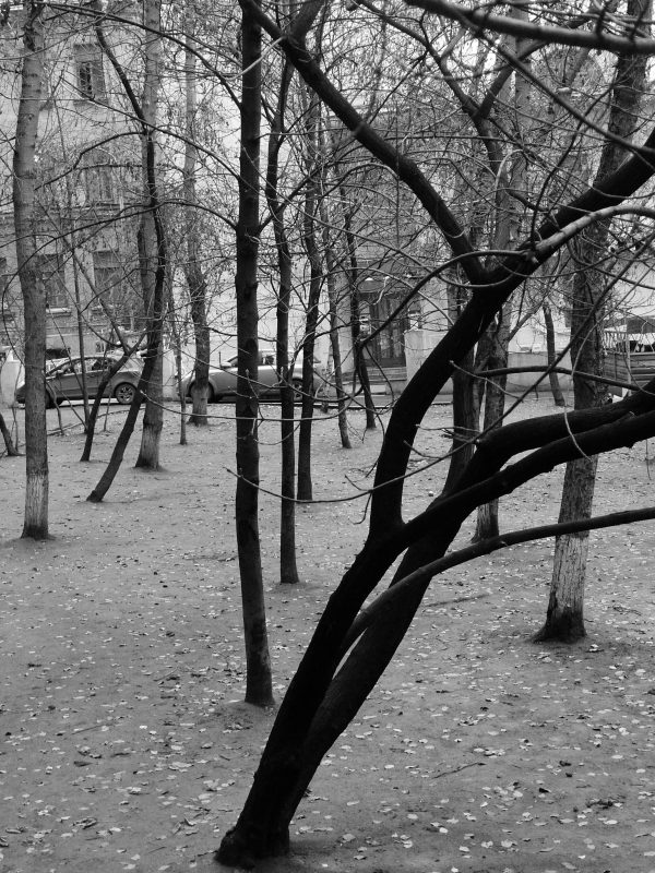 Rostislav Romanov Trees standing free in Moscow, photo 2010
